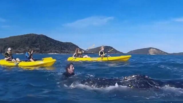 Baleia se aproximou dos humanos para ser ajudada Foto: Reprodução / Facebook