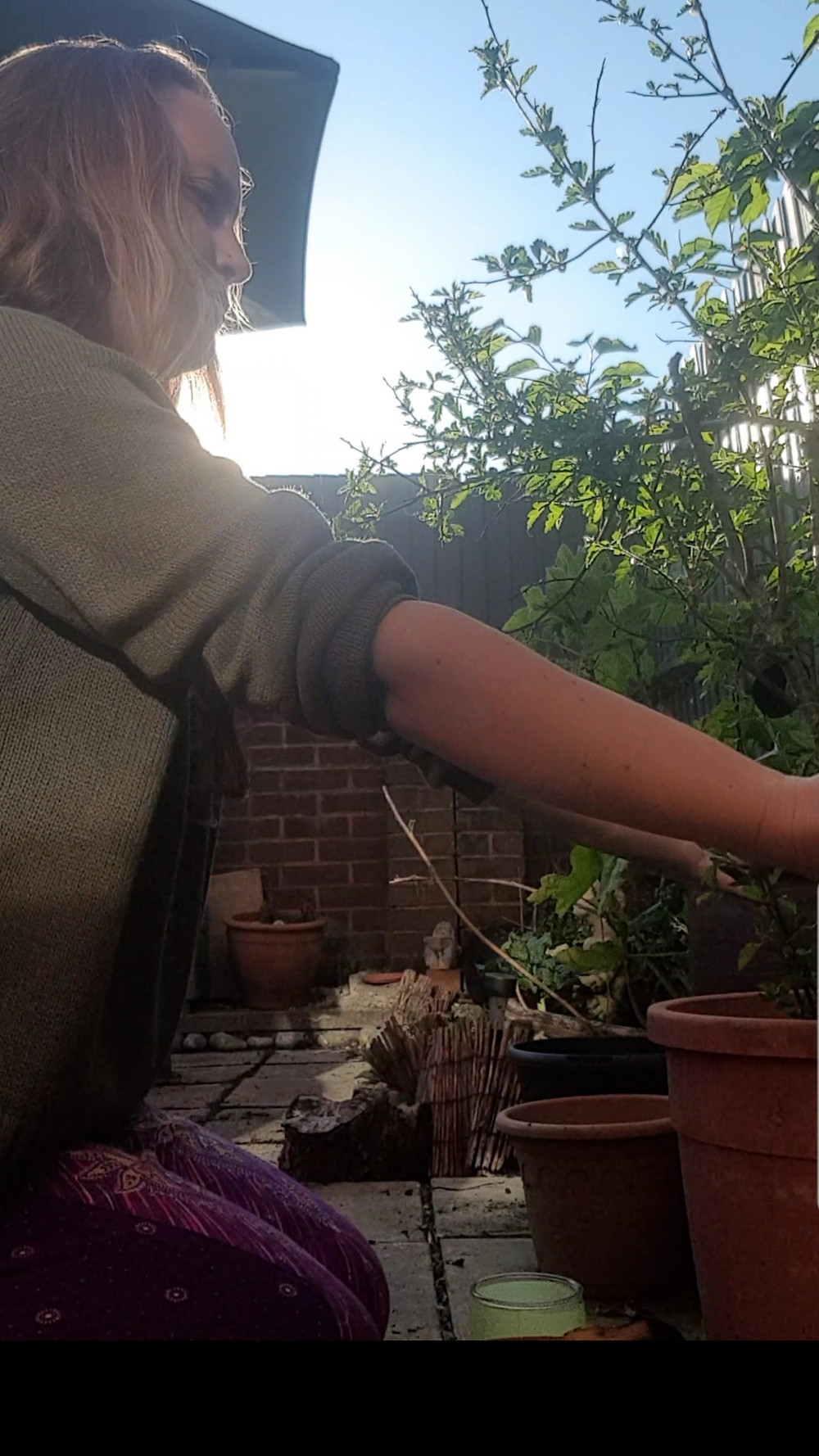 Demonstrating connecting to my daughters Hawthorn in my garden.