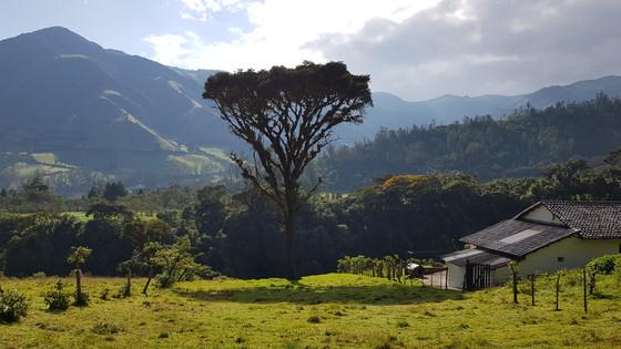 Healing in Ecuador