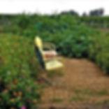 gardenchairs.jpg