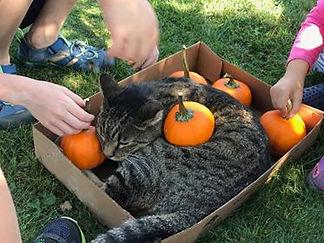 vinnie pumpkins.jpg