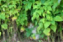 flowerkitty.jpg