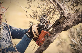 Gehölzschnitt & Baumpflege