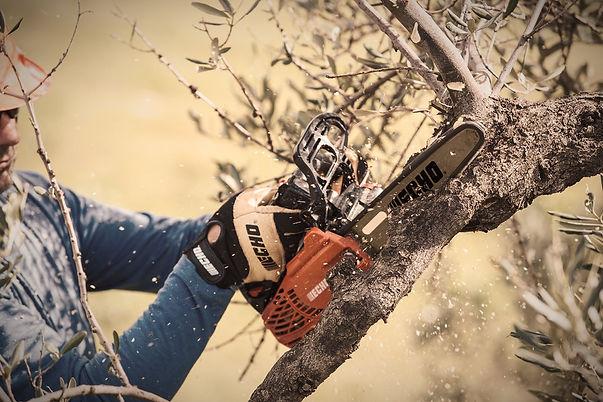 Gehölzschnitt Baumpflege