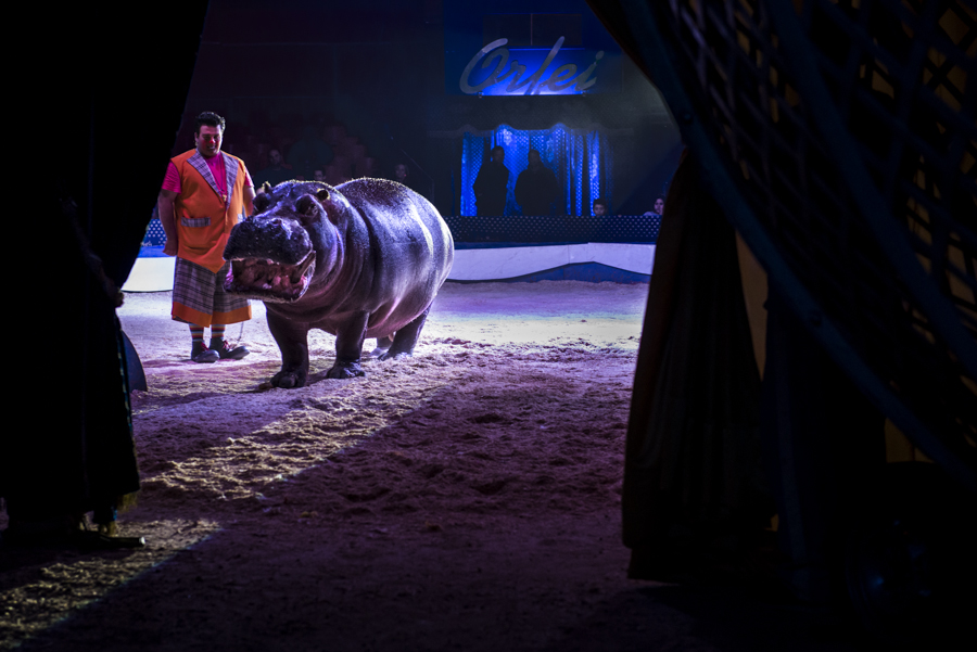 Last Animal Circus