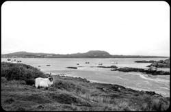 Scotland's low tides
