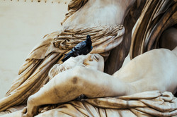 Florence and its pigeons