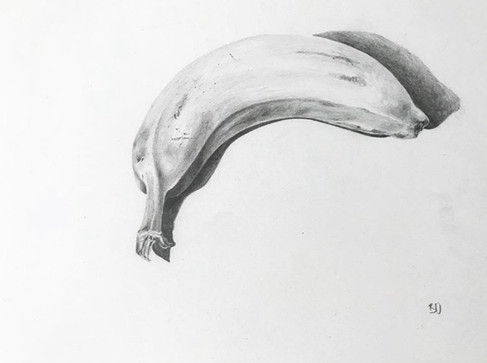 Scientific Illustration by Becky Duncan