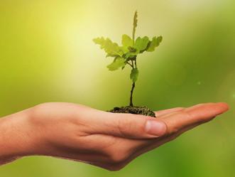 Mês do meio ambiente, participe!