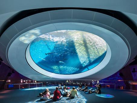 Aquários contemporâneos, uma experiência mística da vida marinha