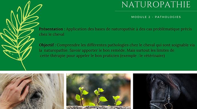 naturo 2.png