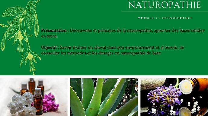 naturo 1.png