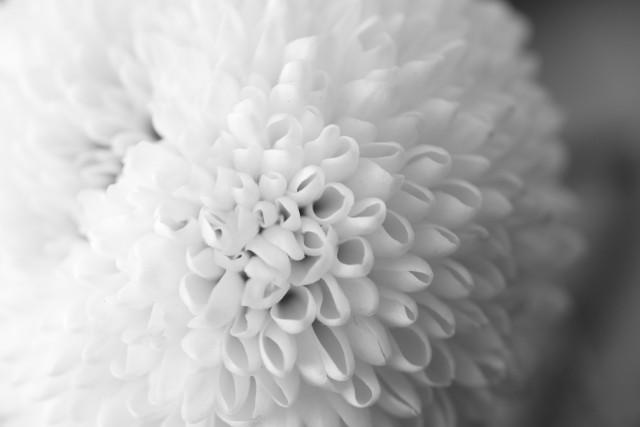 お盆 お供え花