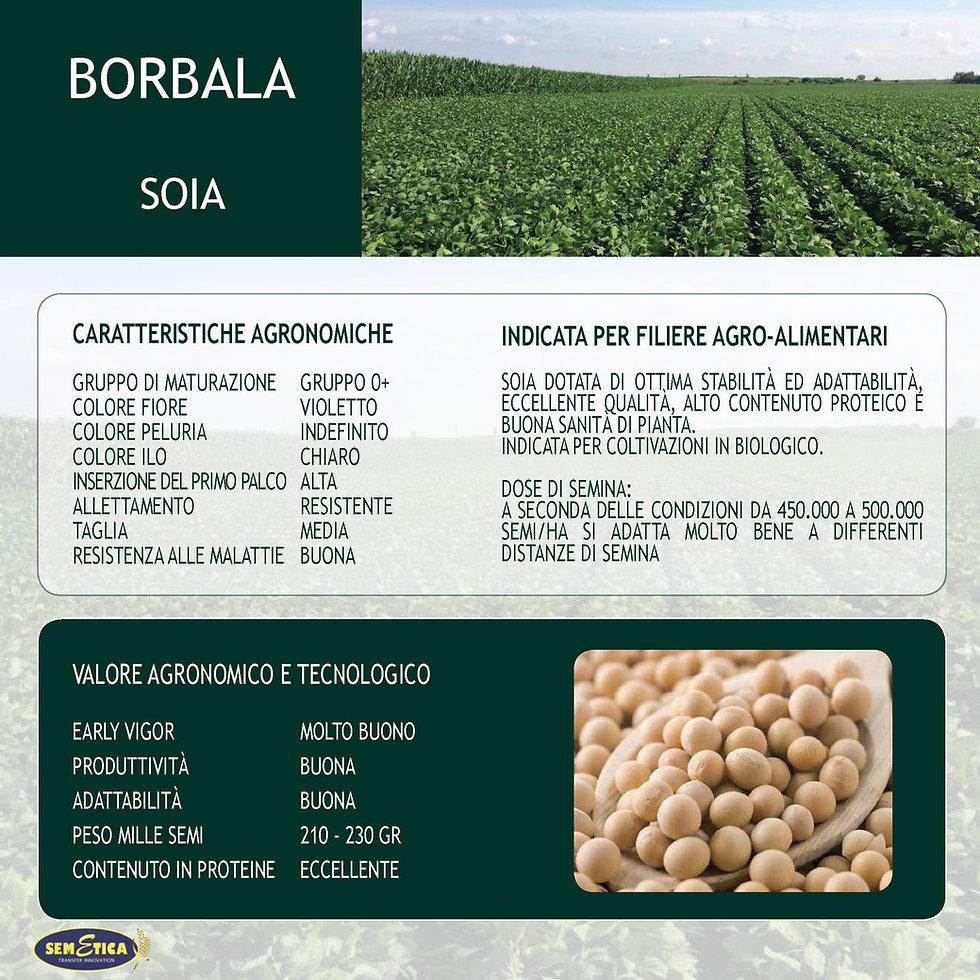 BORBALA-FULL.jpg