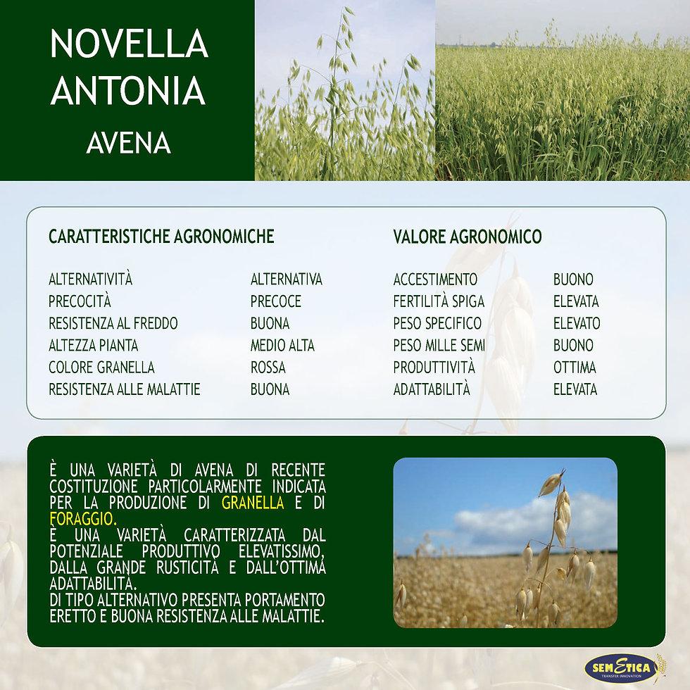 NOVELLA-ANTONIA-FULL.jpg