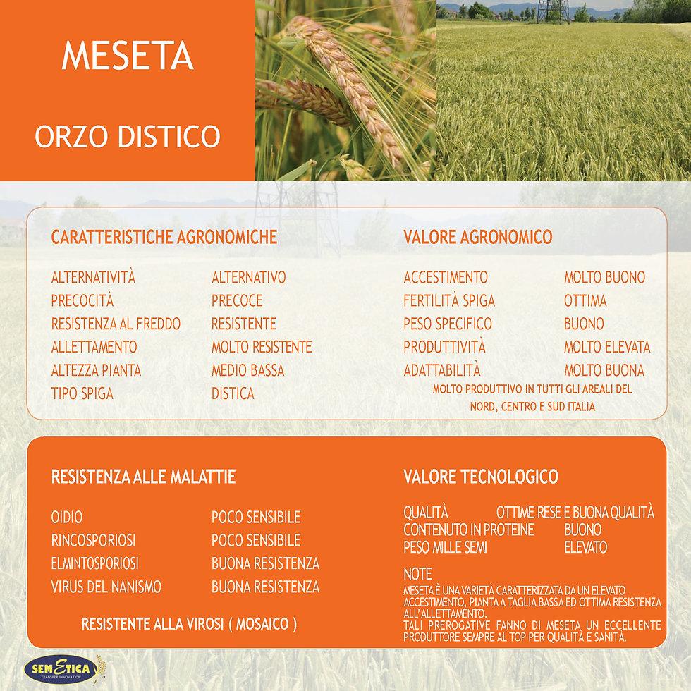 MESETA-FULL.jpg