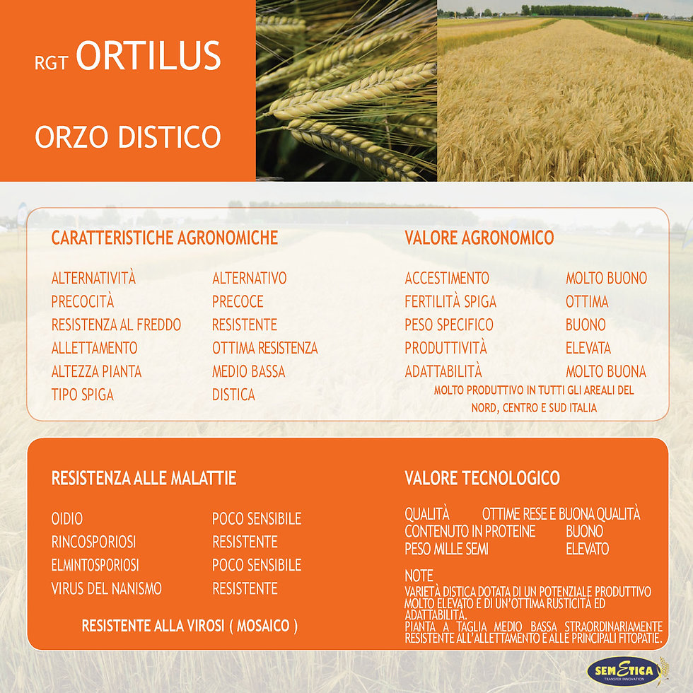 ORTILUS-FULL.jpg