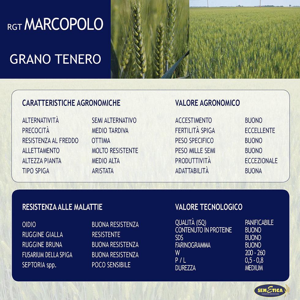 MARCOPOLO-FULL.jpg