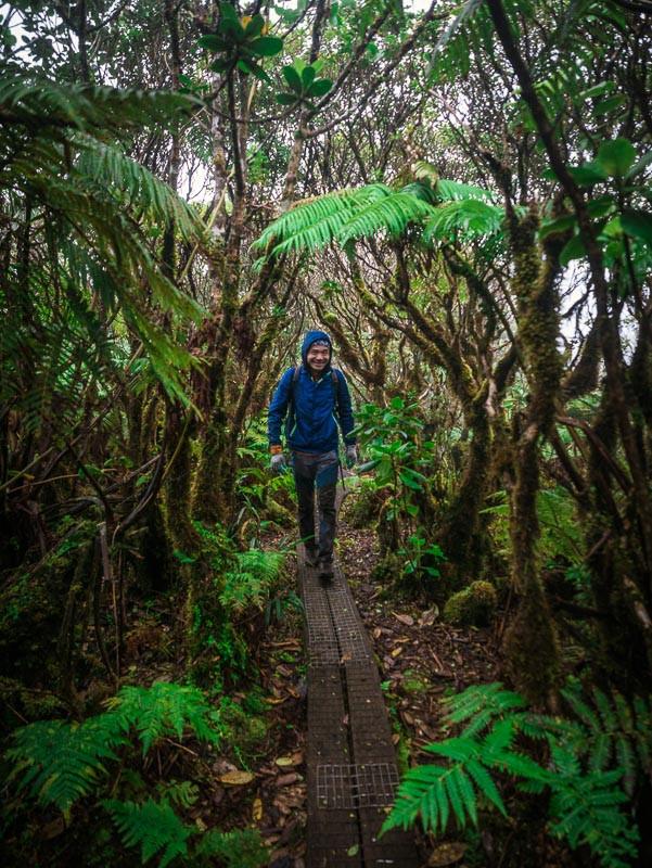 hiker on the ka'ala boardwalk