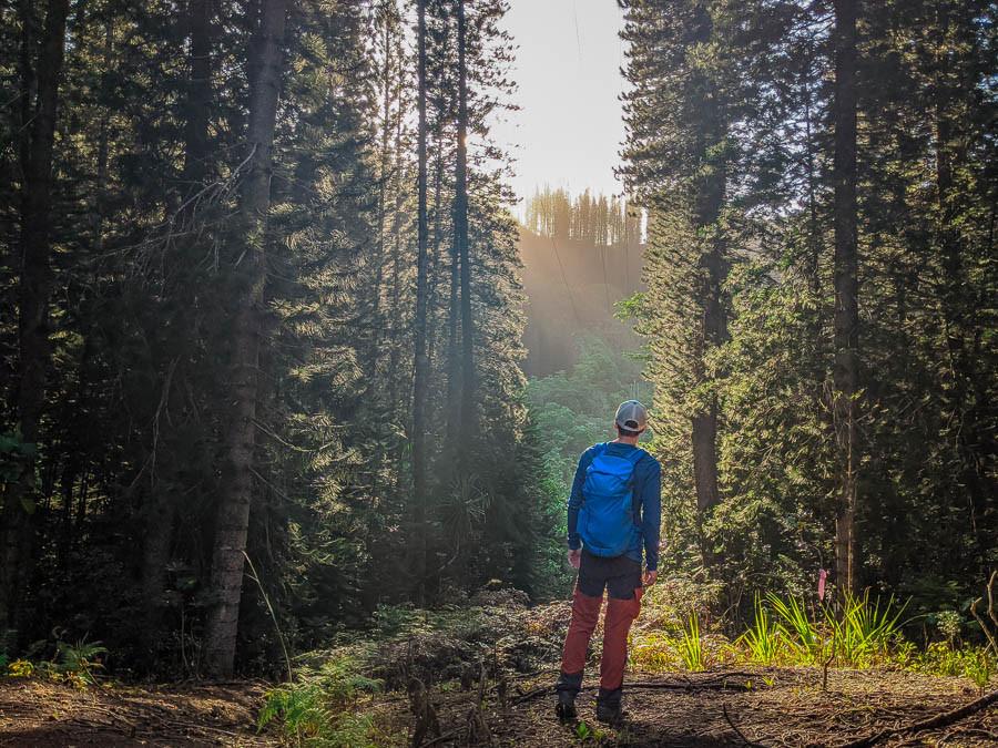 Nandor Szotak hiking in the morning lights