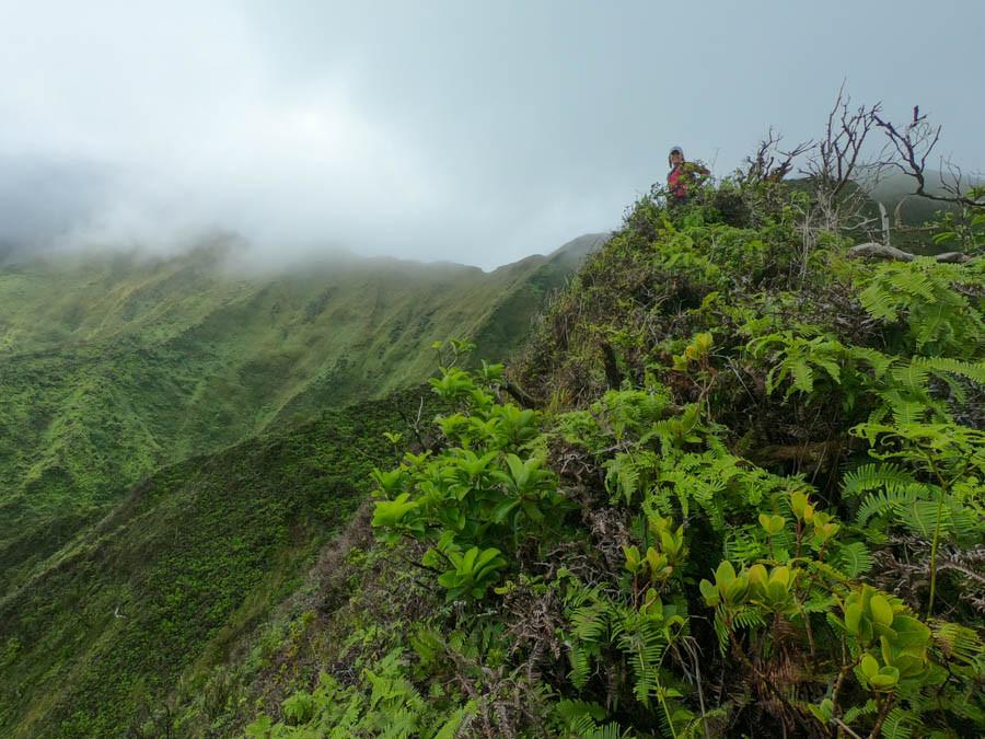 hiker in the koolau mountains