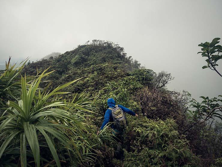 hiker bushwhacking in hawaii