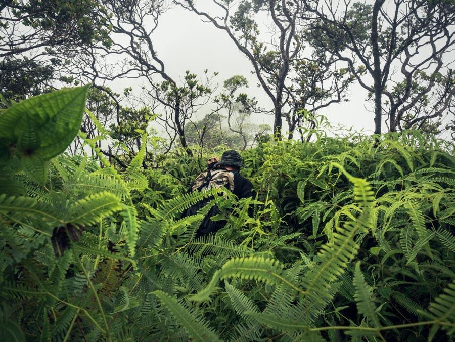hiker in ukuhe fern