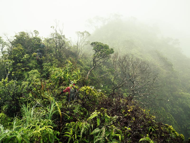 man lost on the northern ko'olaus