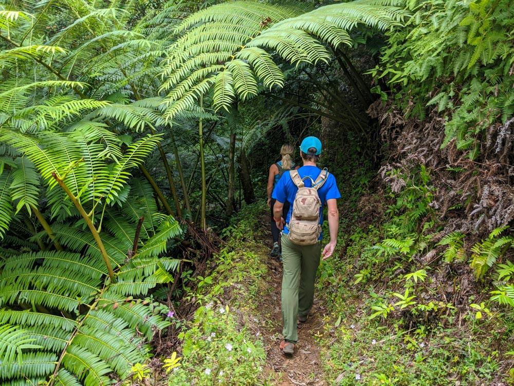maunawili demo trail