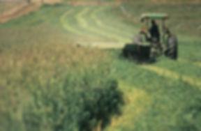 IMG061 Harvesting Hay.jpg