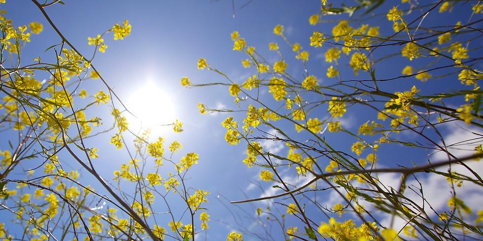 Atelier énergies positives de printemps