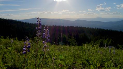 Purple flower on hill side