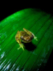 Wild Tree Frog Nature Photo