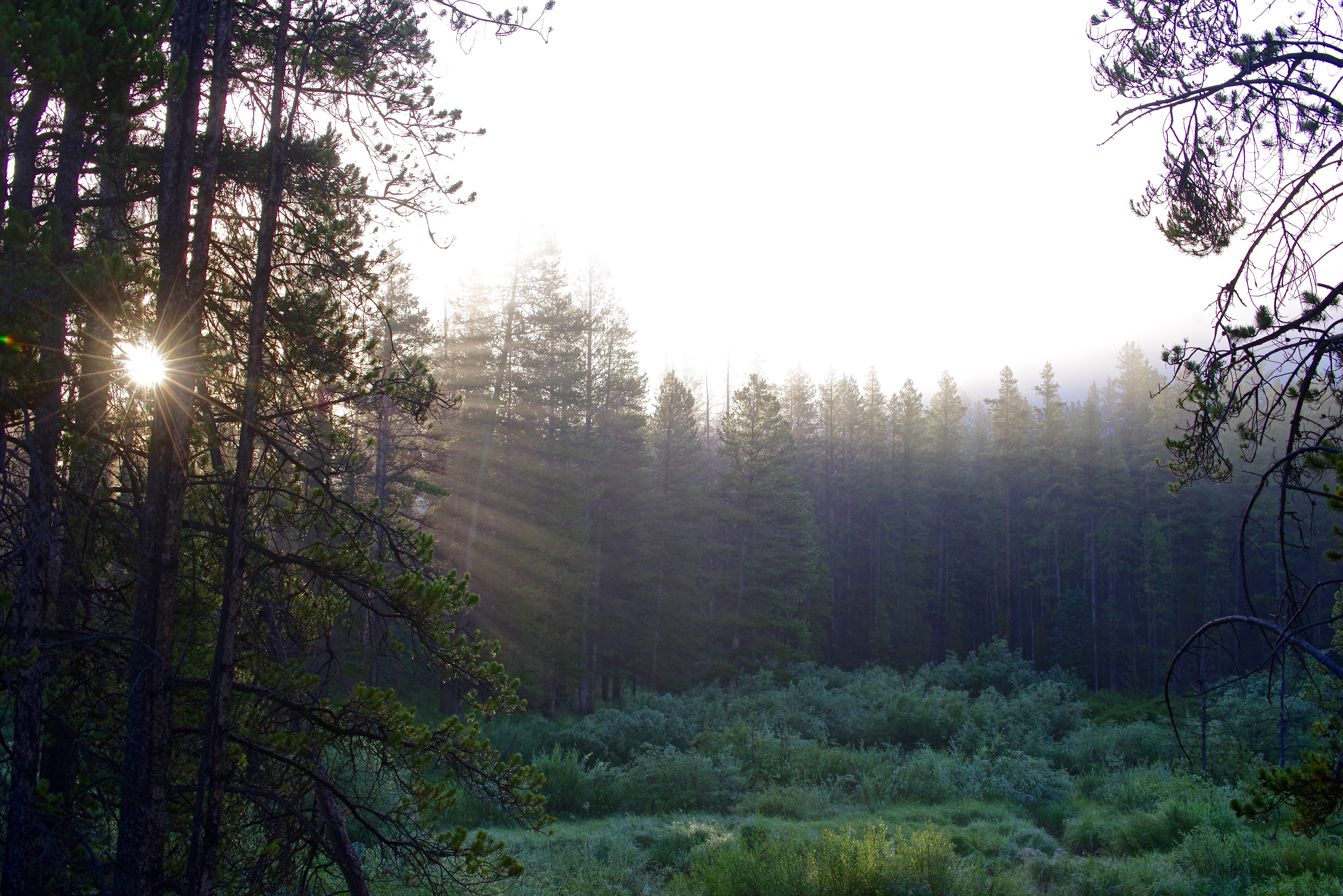 20170720_Homestake Sunrise_3_Trees_Rays_