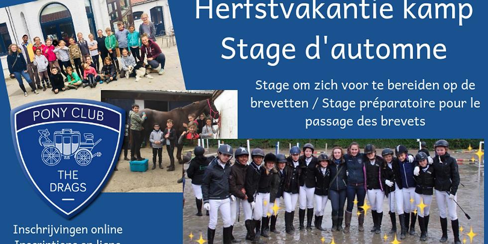 Herfstvakantie kamp - Stage d'automne