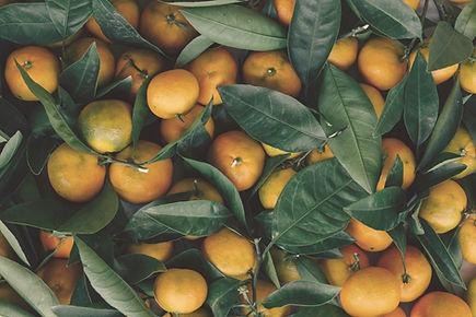 Confitures d'agrumes Maison Marelia