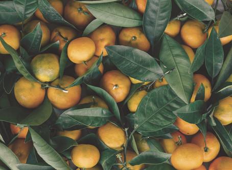 Les fruits de notre jardin
