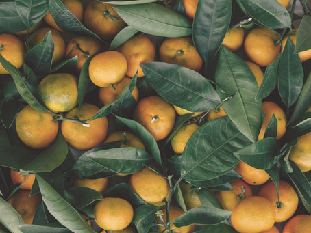 Programa Fruita Bona