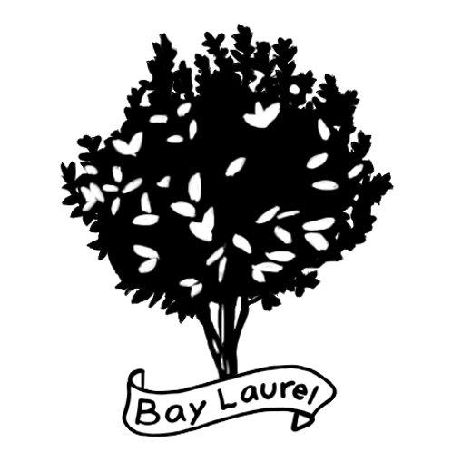 Bay Laurel (Live Edge Slabs)