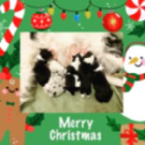 christmas puppies.JPG