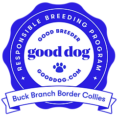 buck-branch-border-collies-badge.png