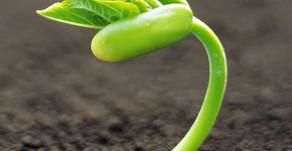 Seed and Angel Investors Enable Venture Capital