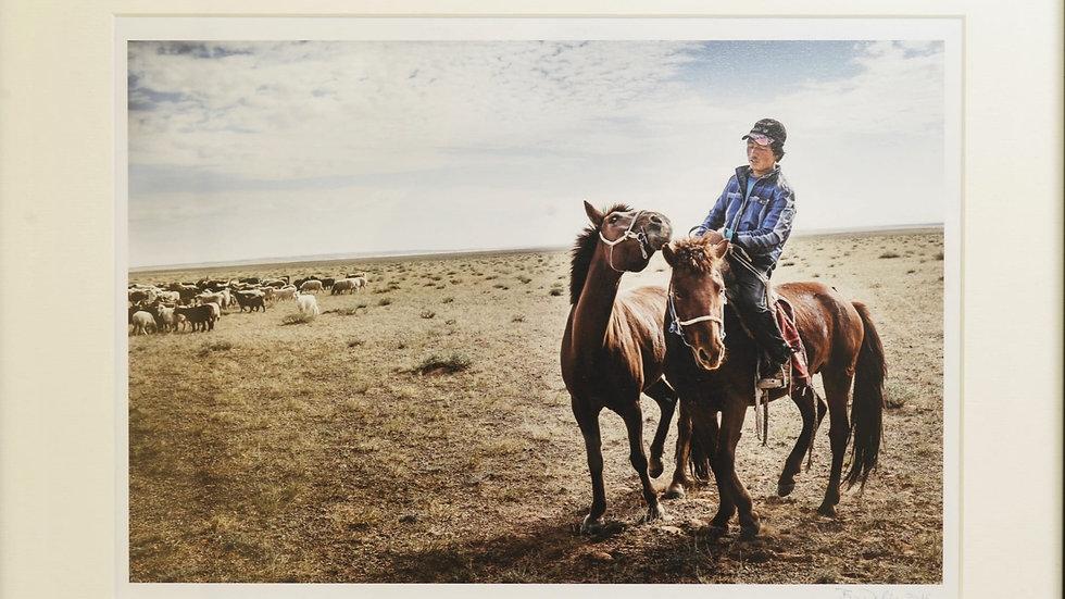 Junger Reiter mit Pferden