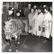 Die Mütter von Ashington, England gingen in den Schacht um sich persönlich um den Zustand der Grubenponys zu kümmern. In den 1940er Jahren. Foto: Trinity Mirror / Mirrorpix / Alamy Stock Photo