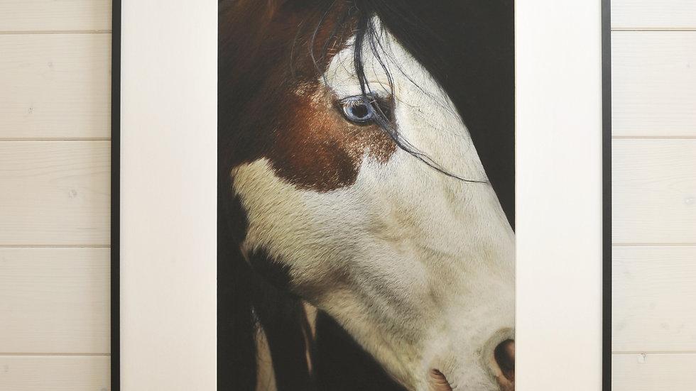 Blue Eyed Mustang