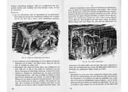 Verhaltensregeln zur Unfallverhütung mit dem Grubenpferd