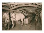 Pferdeführer und Grubenpferd mit Kohlenzug auf der Zeche Prosper I, um 1910. Gut erkennbar ist das typische Geschirr der Grubenpferde im Ruhrbergbau. Foto: Arenberg Bergbau, 1856-1956