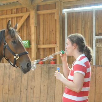 AUTISM - Therapy with mustang