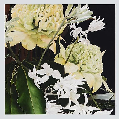 White Waratah and Flannel Flower Print