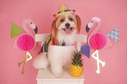 Fluffy Dog Studio Photoshoot (1)